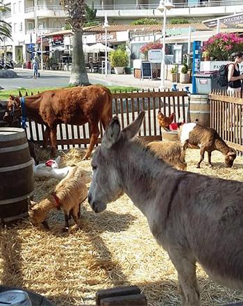 ranch a Grimaud-restaurant a Grimaud-randonnee equestre massif des Maures-centre equestre Cogolin-ferme pedagogique Saint-Tropez-promenade a cheval Sainte-Maxime